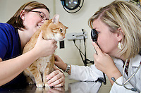 "Mississippi State University, College of Veterinary Medicine, ophthalmologist, Dr. Betbeze and clinical technician, Stephanie Dray, with feline patient, ""Fish""."