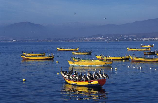 Barques de pecheurs dans le port de La Serena. *** Fishing boats in La Serena harbour, Chile.