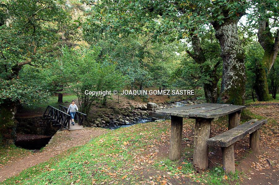 RESERVA NATURAL DEL SAJA.Vista de alguno de los arboles, mesas y puentes que se pueden ver en la reserva Natural del Saja en Cantabria..foto JOAQUIN GOMEZ SASTRE