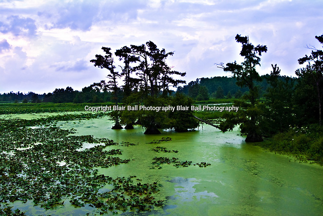 Opening where there was more duckweed and vegetation growing in Reel Foot lake. Near Tiptonville, TN. Reel Foot Lake