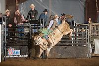 SEBRA - Raphine, VA - 12.14.2013 - Bulls and Action