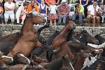 Rapa das bestas en Sabucedo
