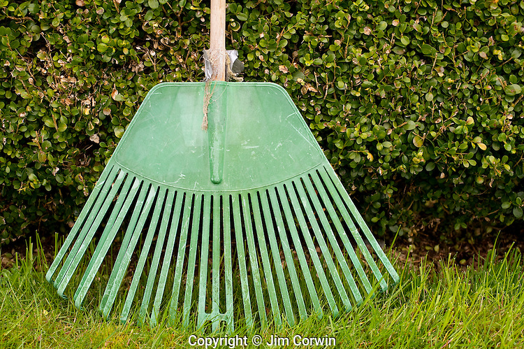 Green rake leaning against green hedge in backyard