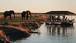Elephants and boat with tourists on the Chobe River, Chobe National Park, Botswana.