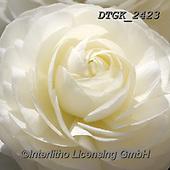 Gisela, FLOWERS, BLUMEN, FLORES, photos+++++,DTGK2423,#f#, EVERYDAY ,portrait