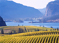 "Vineyards at ""Vaseux Lake"", South Okanagan Valley, BC, British Columbia, Canada - Vaseux Lake Migratory Bird Sanctuary"