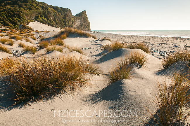 Three Mile Beach, pingao and sand dunes, Westland Tai Poutini National Park, UNESCO World Heritage Area, West Coast, New Zealand, NZ