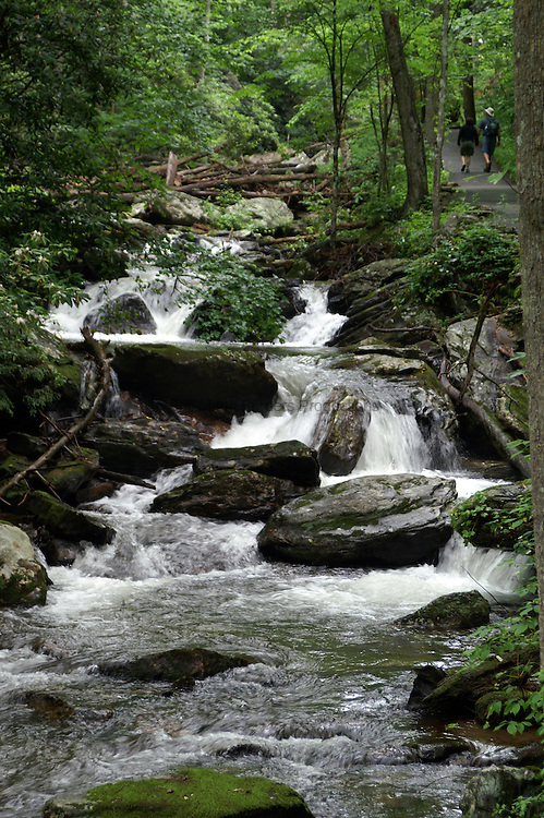 The trail along Smith Creek leading to Anna Ruby Falls provides spectacular views of the creek.  The trail has been paved to provide easy access to the falls.