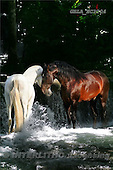 Bob, ANIMALS, horses, photos, GBLAEC1104,#A# Pferde, caballos