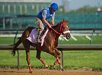 Rose to Gold, trained by Sal Santoro, during morning workouts for the Kentucky Derby at Churchill Downs in Louisville, Kentucky on April 30, 2013.