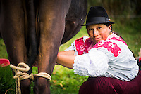 Portrait of an indiginous Cayambe Lady milking her cows at Zuleta Farm, Imbabura, Ecuador, South America