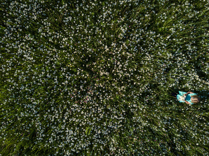 Aerial view of a young girl in a field of daisies.