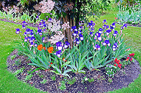 "Iris display gardens with iris in round ""Art Deco"" variety.. Schreiner's Iris Gardens"