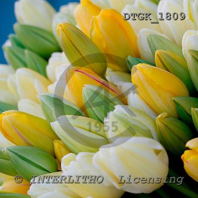 Gisela, FLOWERS, photos, DTGK1809,#F# Blumen, flores, retrato