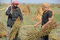 TURKEY, Asmali, near Adana, syrian refugees thresh sesame for low wages for a turkish farmer / TUERKEI, Asmali, bei Adana, syrische Fluechtlinge dreschen Sesam per Hand fuer geringen Lohn fuer einen tuerkischen Farmer
