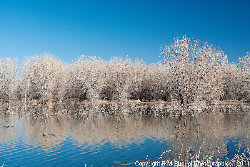 Reflection of trees at Bosque Del Apache NWR
