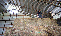 NWA Democrat-Gazette/DAVID GOTTSCHALK  Kipton Moore, 6, climbs down from a stack of square hay bails Tuesday, June 13, 2017 inside one of the barns on the his families' 500 acre Moore Valley Farms near Lincoln. The Moore family was named the 2017 Washington County Farm Family of the Year.
