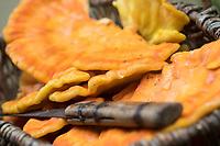 Schwefel-Porling, Schwefelporling, Gemeiner Schwefelporling, Pilzkorb, Pilzernte, Pilze sammeln, Porling, Laetiporus sulphureus, sulphur polypore, sulphur shelf, chicken mushroom, crab-of-the-woods, chicken-of-the-woods, le Polypore soufré