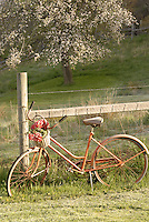 Old Bike and Apple Tree