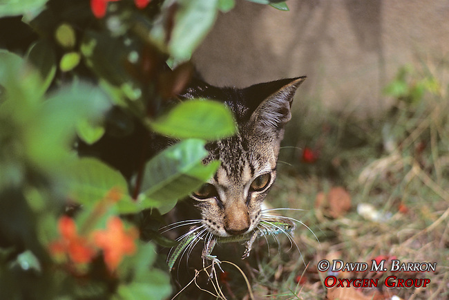 Cat With Lizard In Mouth