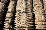 Captage naturel de naissaims d'huitres grace à des coupelles en plastique déposé en mer sur lequel viennent se fixer les naissaims d'huitres.               Benjamin Gaboriau est exploitant ostréicole. Son père et sa mère travaille avec lui. une partie de son exploitation se trouve à Oléron, il y récupère les naissaims et y affine les huitres, la croissance des huitres se fait dans le nord Bretagne vers Morlaix.