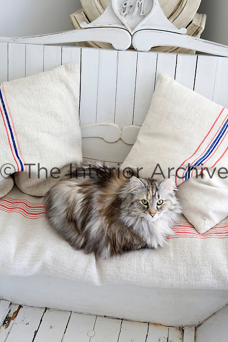 A cat has made itself comfortable on the linen cushions of the antique Swedish sleigh couch