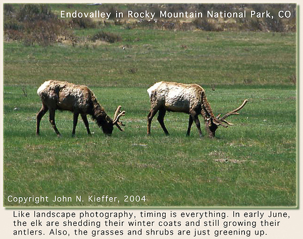 Immature elk, Rocky Mountain National Park, Colorado. John leads private, photo tours throughout Colorado, including Denver and Boulder.