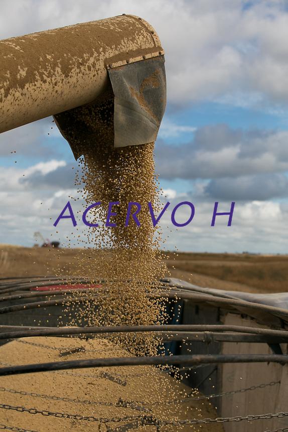 Produ&ccedil;&atilde;o, colheita e estocagem de Soja..<br /> Paragominas, Par&aacute;, Brasil.<br /> Foto Carlos Borges<br /> <br /> A soja (Glycine max), tamb&eacute;m conhecida como feij&atilde;o-soja e feij&atilde;o-chin&ecirc;s,[1] &eacute; uma planta pertence &agrave; fam&iacute;lia Fabaceae, fam&iacute;lia esta que compreende tamb&eacute;m plantas como o feij&atilde;o, a lentilha e a ervilha. &Eacute; empregada na alimenta&ccedil;&atilde;o humana (sob a forma de &oacute;leo de soja, tofu, molho de soja, leite de soja, prote&iacute;na de soja, soja em gr&atilde;o etc.) e animal (no preparo de ra&ccedil;&otilde;es). A palavra &quot;soja&quot; vem do japon&ecirc;s shoyu.[2] A planta &eacute; origin&aacute;ria da China e do Jap&atilde;o. &Eacute; um gr&atilde;o rico em prote&iacute;nas. Dentre os sais minerais, os mais presentes s&atilde;o: pot&aacute;ssio, c&aacute;lcio, magn&eacute;sio, f&oacute;sforo, cobre e zinco. &Eacute; fonte de algumas vitaminas do complexo B, como a riboflavina e a niacina, e tamb&eacute;m em vitamina C (&aacute;cido asc&oacute;rbico). Por&eacute;m &eacute; pobre em vitamina A e n&atilde;o cont&eacute;m vitamina D e B12.[3]