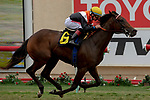 DEL MAR, CA  SEPTEMBER 3:  #6 Summering, ridden by Drayden Van Dyke, in the stretch of the Del Mar Juvenile Fillies Turf on September 3, 2018, at Del Mar Thoroughbred Club in Del Mar, CA. (Photo by Casey Phillips/Eclipse Sportswire/Getty ImagesGetty Images