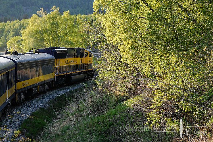 The Alaska Railroad's Coastal Classic train runs along Turnagain Arm into the evening sun.