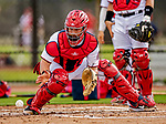 22 February 2019: Washington Nationals catcher Taylor Gushue takes drills at home plate during a Spring Training workout at the Ballpark of the Palm Beaches in West Palm Beach, Florida. Mandatory Credit: Ed Wolfstein Photo *** RAW (NEF) Image File Available ***
