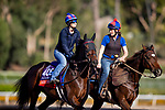 OCT 28: Breeders' Cup Turf entrant Mrs. Sippy, trained by H. Graham Motion, at Santa Anita Park in Arcadia, California on Oct 28, 2019. Evers/Eclipse Sportswire/Breeders' Cup