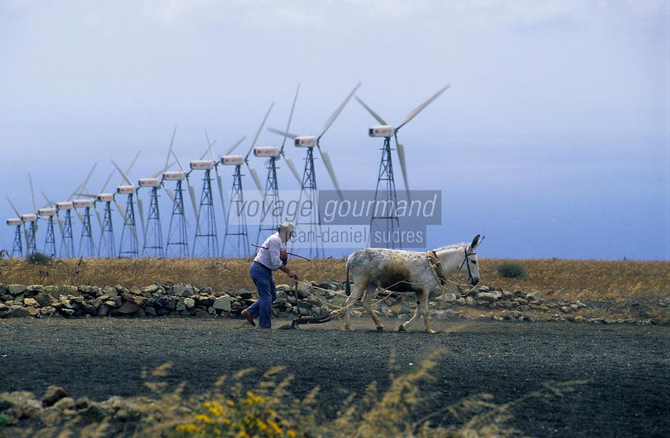 Europe/Espagne/Canaries/Lanzarote/Los Valles : Parc d'éolienne et travaux des champs