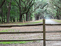 Stock photo: Wooden fence looking on the oak tree lined path at wormsloe plantation in Savannah Georgia USA.