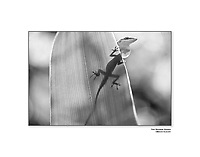 Fine Art Wildlife Prints