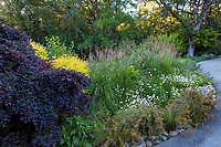 Mixed border with shrubs, grasses, and perennials at Marin Art and Garden Center, Ross, California