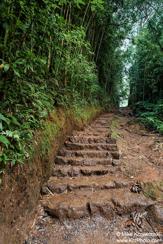 Uphill steps on the trail to Manoa Falls, Honolulu, Oahu