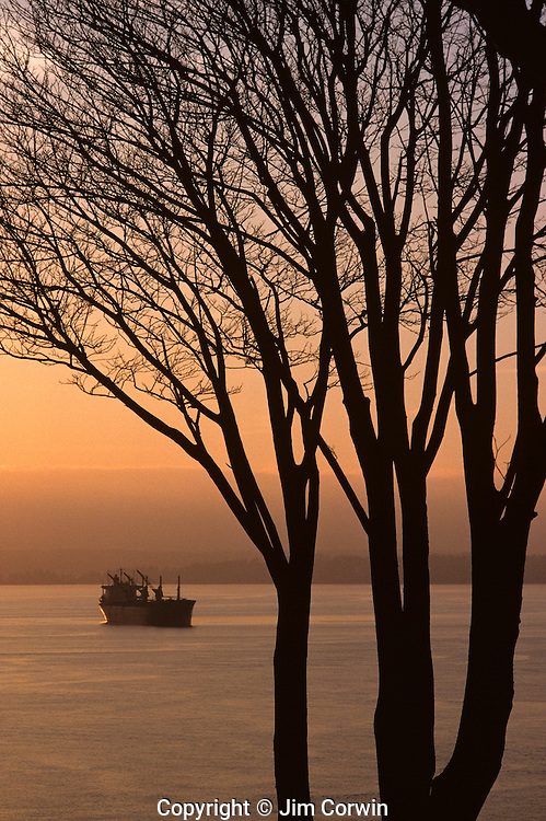 Sunset over Elliot Bay with a tanker moored in Sound and silhouetted trees Seattle, Washington State USA.