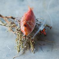 Poissons - Fish