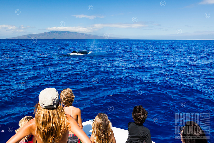 A family observes a whale swimming close to their boat off the coast of Maui.