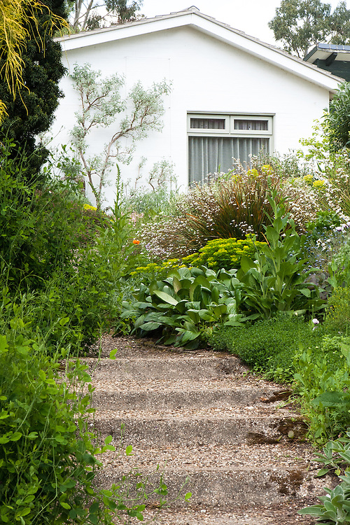 Beth Chatto Garden, late May.
