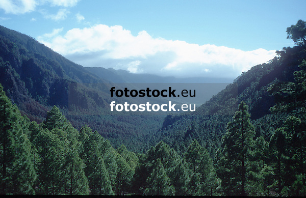 overview over the forest of the National Park Caldera de Taburiente National Park, La Palma de Gran Canaria<br /> <br /> vista sobre el bosque del Parque Nacional Caldera de Taburiente, La Palma de Gran Canaria<br /> <br /> Blick &uuml;ber den Wald des National Parks Caldera de Taburiente, La Palm de Gran Canaria<br /> <br /> Original: 35 mm slide transparency
