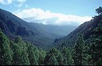 overview over the forest of the National Park Caldera de Taburiente National Park, La Palma de Gran Canaria<br /> <br /> vista sobre el bosque del Parque Nacional Caldera de Taburiente, La Palma de Gran Canaria<br /> <br /> Blick &uuml;ber den Wald des National Parks Caldera de Taburiente, La Palm de Gran Canaria<br /> <br /> Original: 35 mm slide transparency