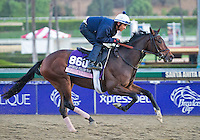 Granny Mc's Kitten, trained by Chad Brown, trains for the Breeders' Cup Juvenile Fillies Turf at Santa Anita Park in Arcadia, California on October 30, 2013.
