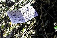 Roma, 14 Febbraio 2019<br /> Tessera elettorale buttata in strada.<br /> Agricoltori e olivicoltori con i gilet arancioni protestano in Piazza Santi Apostoli, chiedono il riconoscimento dello stato di calamità dopo le gelate di febbraio 2018, interventi mirati e decisi contro la xylella .
