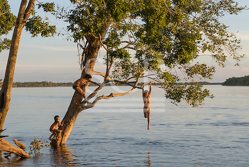 Xingu Indigenous Park, Mato Grosso State, Brazil. Posto Diauarum. Kids swinging from a tree over the Xingu river in the afternoon.