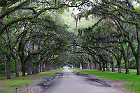 Stock photo: Car emerging from the oak trees lined avenue of wormsloe plantation in Savannah Georgia USA.