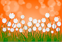 Vector background with Indian flag colors themed landscape - orange sky, white Tulips and green grass.<br />