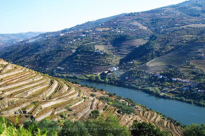 vineyards douro portugal