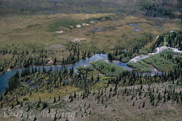 731000124 the thelon river and game sanctuary at the northern edge of the taiga forest in the barrengrounds of the northwest territories in canada